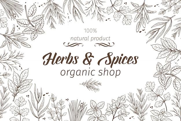Herbes et épices de croquis dessinés à la main