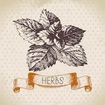 Herbes et épices de cuisine. fond vintage avec menthe croquis dessinés à la main