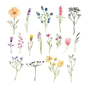 Herbes et fleurs aquarelle isolés sur blanc