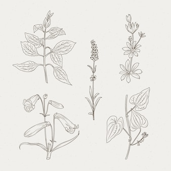 Herbes et fleurs monochromes