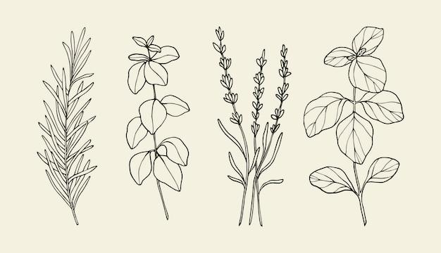 Herbes et plantes culinaires dessinées à la main