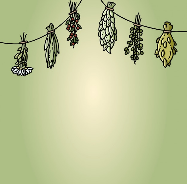 Herbes séchées pendantes sur le fil