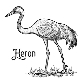 Héron vintage