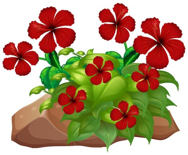 Hibicus rouge avec des feuilles