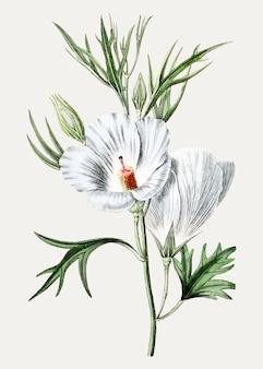 Hibiscus bleu