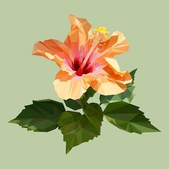 Hibiscus orange polygone ou rose de chine avec feuilles