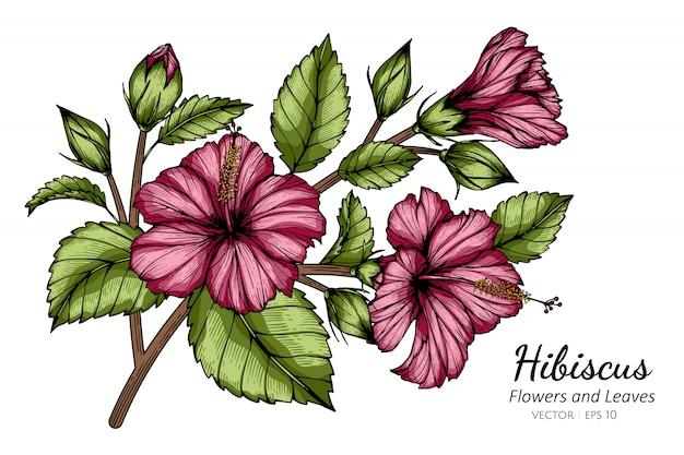 Hibiscus rose fleur et feuille dessin illustration