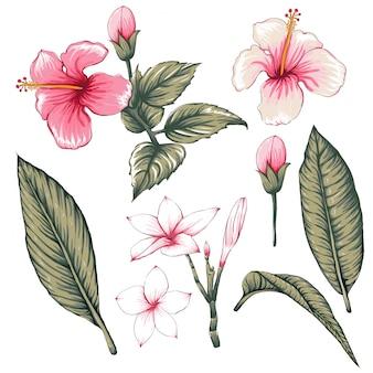 Hibiscus rose, fleurs de frangipanier.