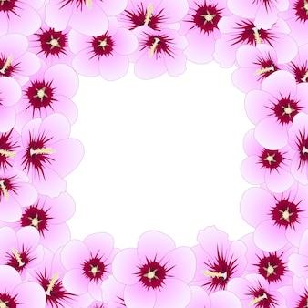 Hibiscus syriacus - rose de la frontière de sharon.