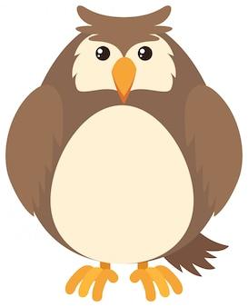 Hibou brun