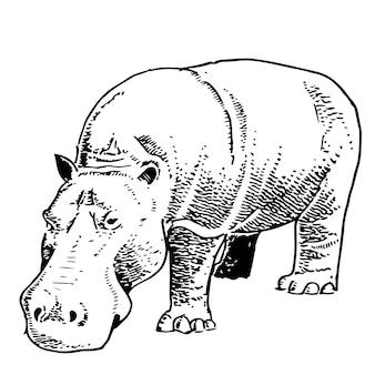 Hippopotame de style croquis dessinés à la main isolé