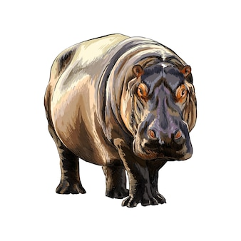 Hippopotame d'une touche d'aquarelle
