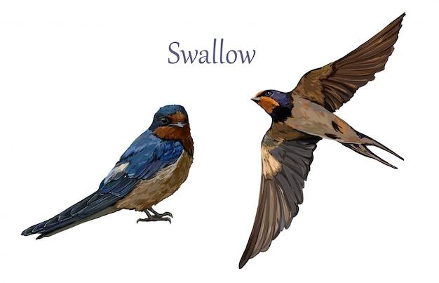 Hirondelle illustration oiseaux isolés volant.