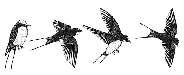 Hirondelles dessin vectoriel à la main