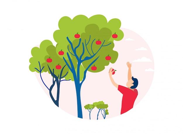Homme, cueillette, pomme, hors, découpage arbre, illustration