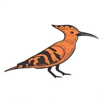 Hoopie oiseau sauvage.