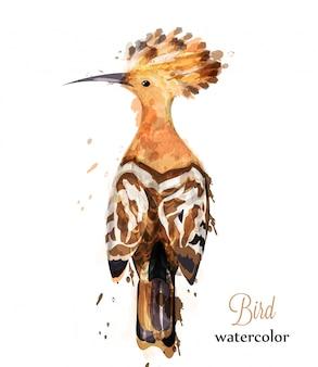 Hoopoe oiseau aquarelle