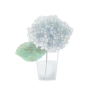 Hortensias bleus dans un vase. sur fond blanc.