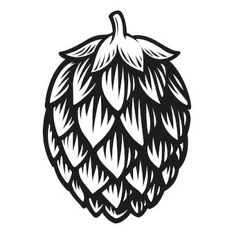 Houblon de bière isolé sur blanc