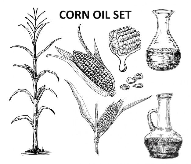 Huile de maïs définie à l'encre illustration dessinée à la main