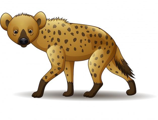 Hyène drôle de dessin animé à pied isolé sur fond blanc