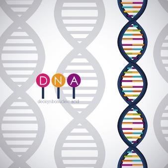 Icône chromosome de la structure de l'adn