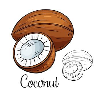 Icône de dessin de noix de coco