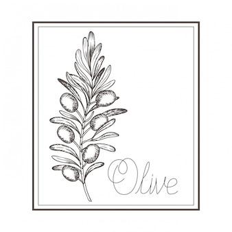 Icône isolé dessin fleur olive