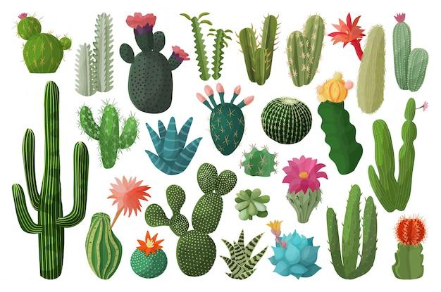 Icône de jeu de dessin animé isolé de cactus. illustration cactus mexicains sur fond blanc. dessin animé mis icône cactus avec fleur.