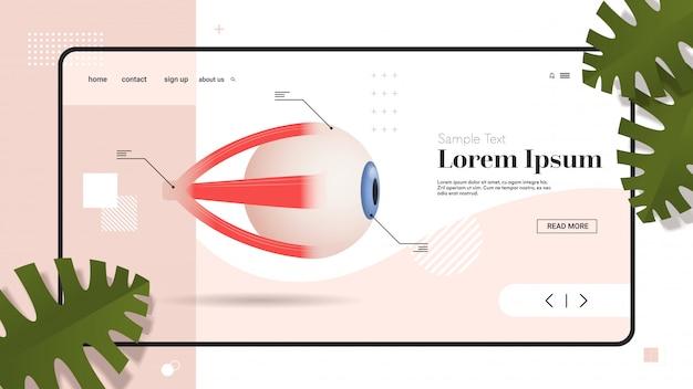 Icône de l'œil humain structure de l'organe interne détaillée globe oculaire médical soins de santé anatomie biologie concept plat copie espace horizontal