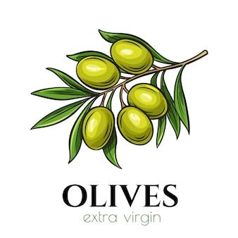 Icône d'olives dessinées à la main