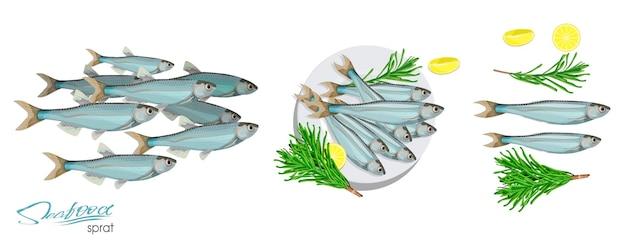 Icône de poisson de vecteur de croquis de sprat image vectorielle de sprat de l'océan