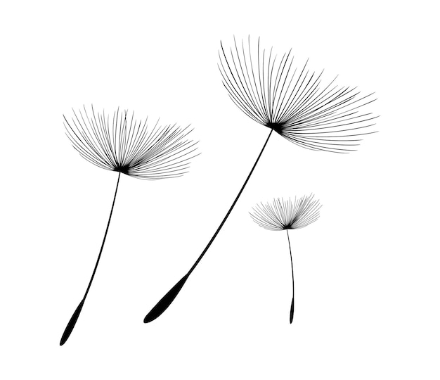 Icône de vecteur de graines de pissenlit volantes élément de décoration isolé de vecteur de silhouettes éparses