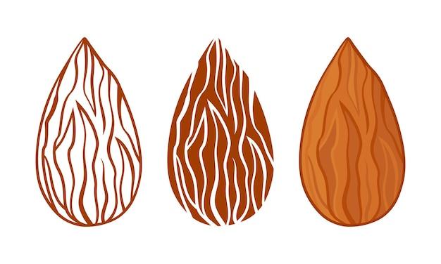 Icône vectorielle de silhouettes d'amande, ensemble de graines de noix entières, ligne et design plat. illustration de la nourriture