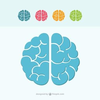 Icônes cérébrales colorées