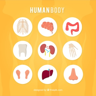 Icônes du corps humain