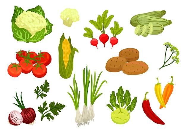 Icônes de légumes de la ferme. légumes de la ferme végétarienne. chou-fleur, tomate et oignon, maïs et persil, poireau et radis, pomme de terre, chou-rave, courgette, aneth, éléments de piment pour épicerie