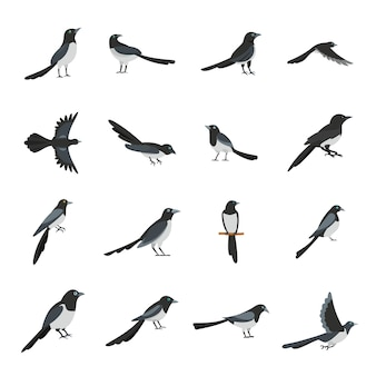 Icônes d'oiseau corneille pie définir style plat