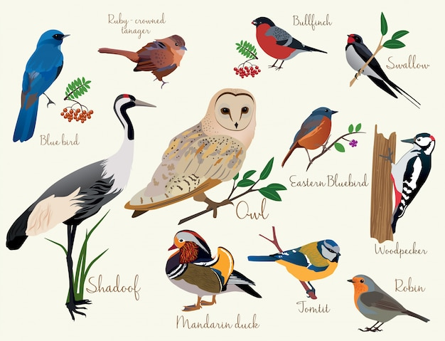 Icônes d'oiseaux