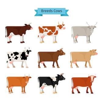Icônes plats de vache.