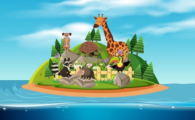 Une île et des animaux exotiques