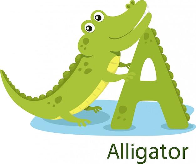 Illustrateur de a avec alligator