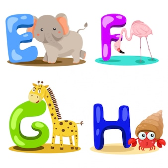 Illustrateur alphabet animal lettre - e, f, g, h