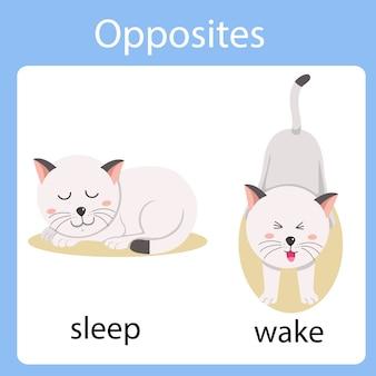 Illustrateur des contraires dormir et se réveiller