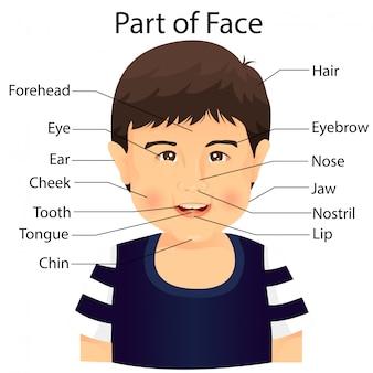 Illustrateur d'une partie du visage