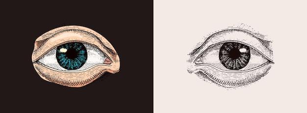Illustration de l'anatomie des organes de la biologie humaine gravée à la main dessinée dans un vieux croquis et un visage de style vintage