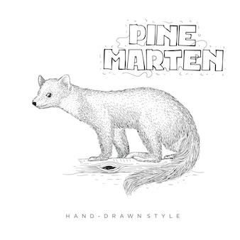 Illustration animale dessinée à la main de martre des pins