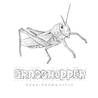 Illustration animale dessinée à la main de sauterelle