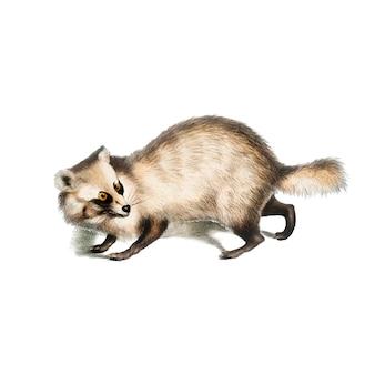 Illustration animale vintage