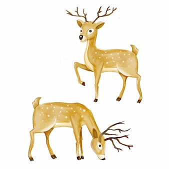 Illustration d'animaux aquarelle forêt de cerf isolé sur fond blanc